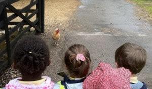 Chirpy school