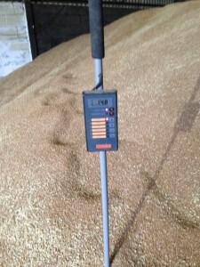 Wheat Spear