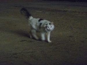 Bunce the cat