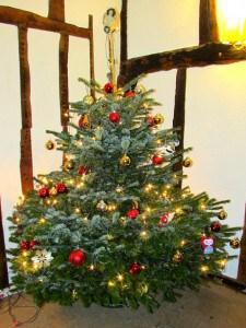 Cmas Tree