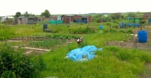 The Allotments 2