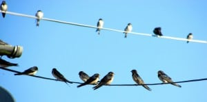 Last Swallows 2