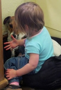 The Dog's Teacher