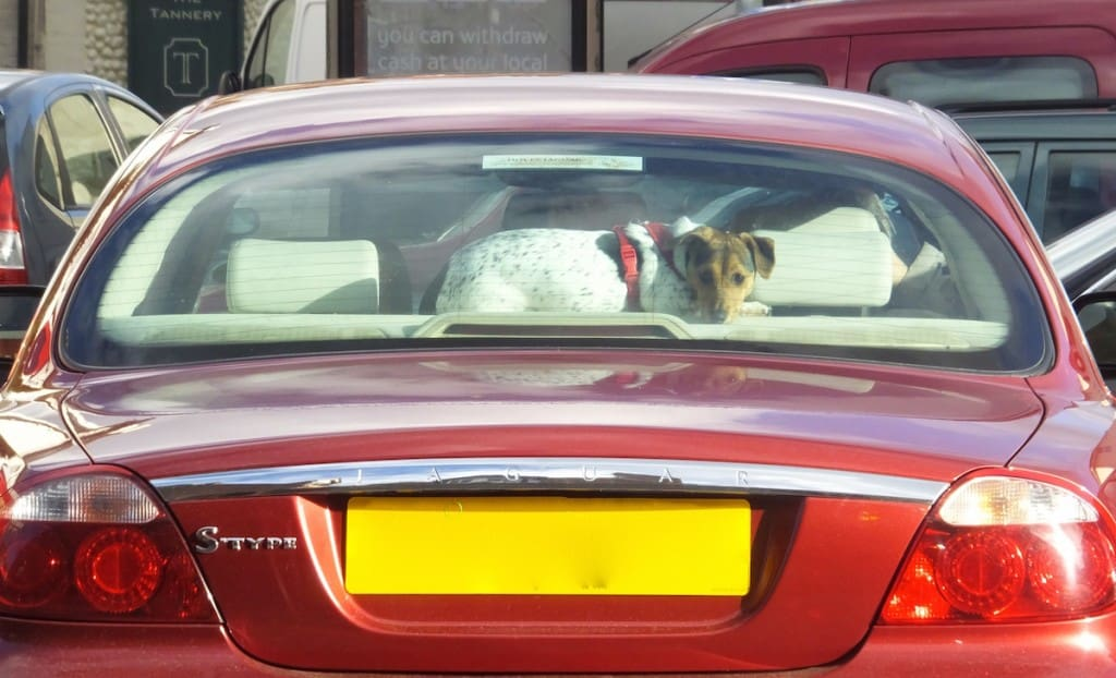 The rear window Terrier