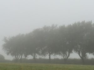 Foggy August