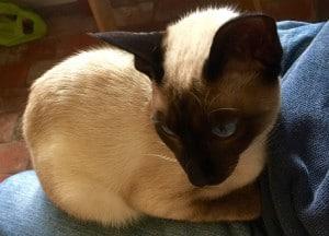 Tivi Kitten