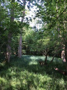 Wood 062