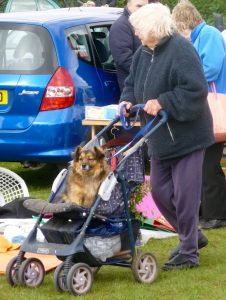 Pushchair Dog