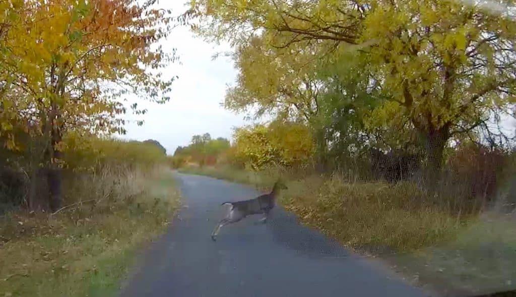 deer-jump-pic