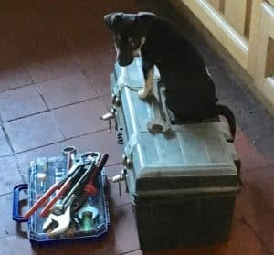 puppy-plumber